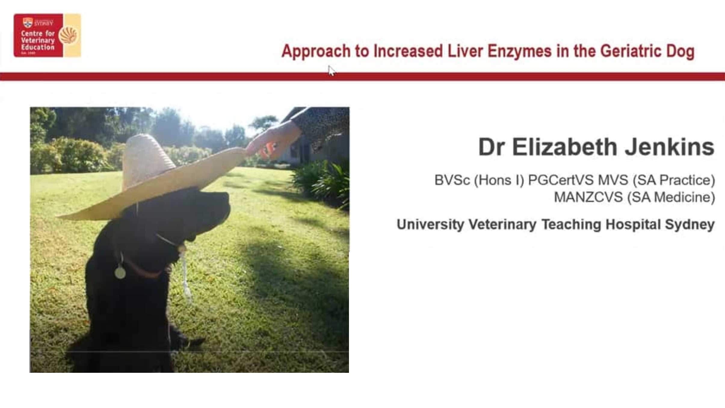 Increased Liver Enzymes in the Geriatric Dog WebinarLIVE!