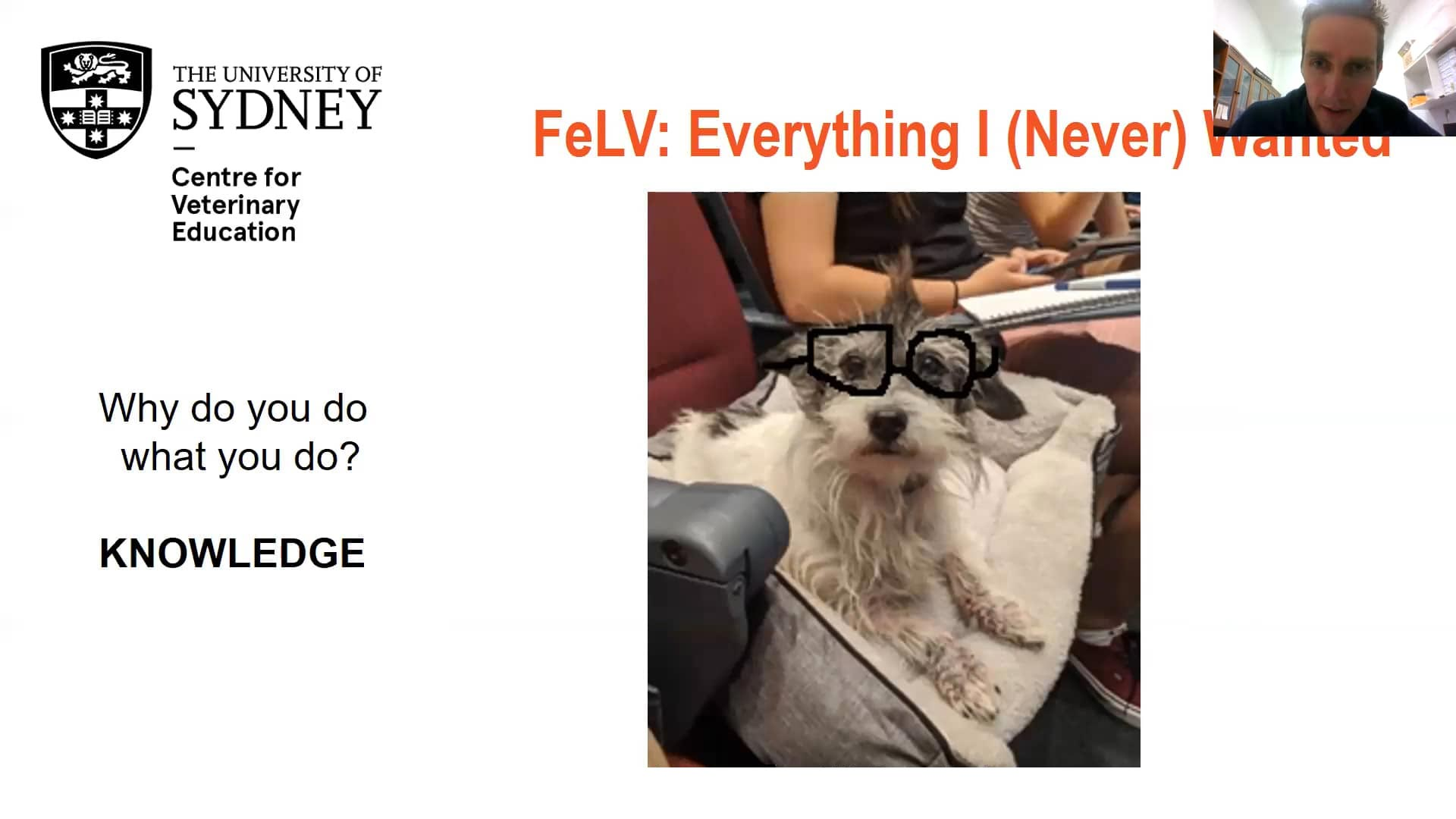 FeLV: Everything (I Never) Wanted WebinarLIVE!