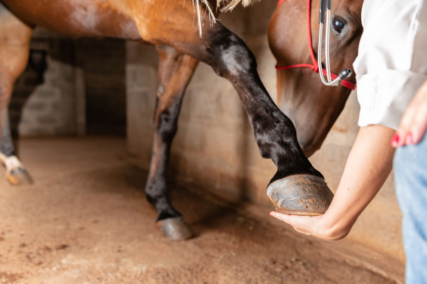 Synovial Infections in Horses WebinarPLUS