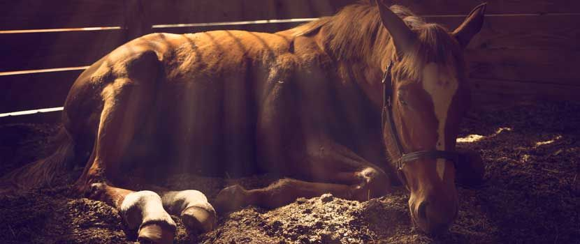 Equine Endocrine Disease TimeOnline