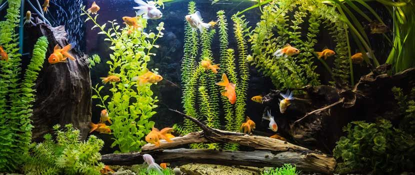 Pet & Aquarium Fish TimeOnline